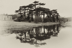 Cedar reflection (Fin Wright) Tags: park reflection tree canon landscape ian landscapes antique powershot national cedar trust wright fin nationaltrust ianwright attingham attinghampark g10 finwright finwrightphotographycouk finwrightphotography