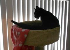 Stretch (Mr. Ducke) Tags: cat kitty parsnip catnipaddicts