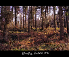 Elham park wood (bonksie61) Tags: sky brown black tree green woods naturesbest canondslrusergroup flickrstars royalgroup elhamparkwood flickraward almostanything shining★star naturelimited canonimagination
