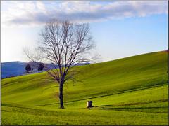 green (Luigi Alesi) Tags: italy tree verde green nature canon landscape scenery italia natura erba albero prato marche paesaggio macerata cingoli passeggiandoinbicicletta platinumheartaward sx230hs