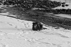 The Boy by the Sea (Roy Sieh) Tags: sea dog teddy larkollen