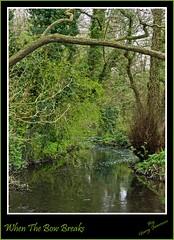 Roche Abbey (gazjeavons) Tags: water lumix spring panasonic rivers streams scenics rocheabbey dmcg2