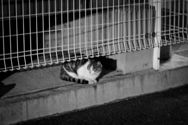 Today's Cat@2012-02-18