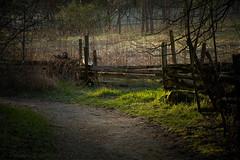 arboretum morning (D J England) Tags: ontario guelph arboretum southernontario dje canoneos7d djengland djenglandphotography douglasjengland canonefs1585f3556