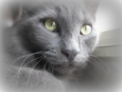 "My beautiful boy ""Greyson"" (Debi's kids (Here very little)) Tags: pet animal cat canon kitten feline greyson sweetfreedom kissablekats bestofcats catmoments"