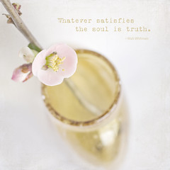 truth satisfies the soul (Dailyville) Tags: branch blossom bloom shrub japanesequince textured dailyville kimklassentexture beyondlayers