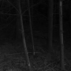 anxiolytic (vaquey) Tags: germany deutschland 28mm karlsruhe badenwürttemberg grd4 vaquey speziatode vaqueyvisions ©2011vaquey ricohgrdigital4