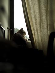 Tabby, rainny afternoon (Showtaro) Tags: tabby olympus f18 45mm ep3 m43