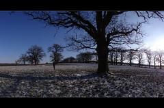 amazing oaks (JoannaRB2009) Tags: blue trees winter sky sun nature sunshine germany landscape hessen meadows natura fields oaks zima niebieski pola hesse słońce przyroda niebo łąki drzewa krajobraz niemcy dęby beberbeck hesja