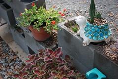 CInder Block Wall (butler&indi) Tags: cinderblock generalbiergartenupperhousedecor