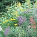 Darcie McKelvey's native plant garden in Caledon