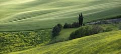 Tuscany 77 (lotti roberto) Tags: landscape tuscany toscana fav25 fav50 fav75 fav100 fav125