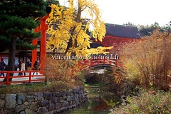 Shimogamo001 (vincemarion) Tags: red fall nature japan automne landscape rouge maple shrine autumnleaves momiji paysage japon feuille koyo erable shimogamojinja couleurautomnale