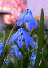 IMG_3616 (Lisa.R.Camp5) Tags: flowers newyork color nature spring april springflowers