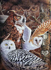 "Can You Find All ""Eleven Owls?"" (Puzzler4879) Tags: art puzzles pointshoot owls puzzling canonpowershot musictomyeyes wildlifeart canondigital hiddenimages canonaseries canonphotography wonderfulphotos jigsawpuzzles a590 royalgroup owlart canonpointshoot flickraward heartawards a590is canona590is canonpowershota590is canonpowershota590 canona590 artisticpuzzles angelawards handselectedphotographs mygearandme mygearandmepremium buildyourrainbowtransparent level1photographyforrecreation redgroupno1 11owls stevenmichaelgardner elevenowls"