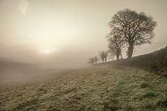 Mistopia (nalamanpics) Tags: mist nature fog sunrise landscape countryside day devon exeter naturesbeauty impressedbeauty devoncountryside rubyawardsinvitation