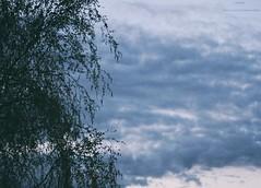 window (lelyasmi) Tags: life christmas new city november blue winter sunset wild sun holiday snow black flower cute green love film home apple window nature water girl beautiful animal canon neck stpetersburg lens fun nose monkey book photo spring pain still nice squirrel wolf hand sleep reptile clown w like strawberries kittens best lizard converse cons firewood grown nicely happily tumbler sheepherd