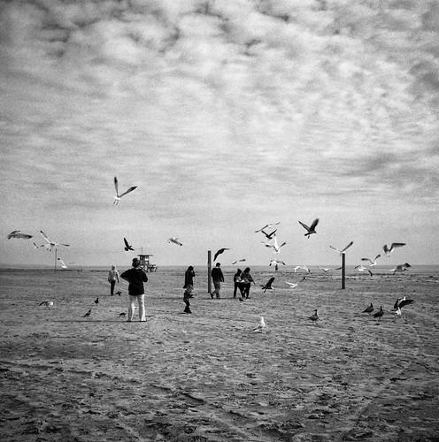 Birds in Balboa