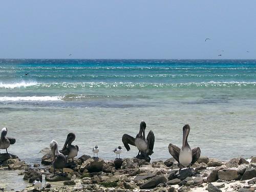 Aruba 67