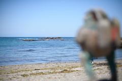 20160505-D7-DSC_9686.jpg (d3_plus) Tags: sea beach 50mm nikon fine nikkor kanagawa   50mmf14 miura  fineday  50mmf14d nikkor50mmf14    afnikkor50mmf14 50mmf14s kanagawapref nikond700 aiafnikkor50mmf14 nikonaiafnikkor50mmf14