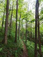 Oasi WWF del Bassone 012 (MarioVare) Tags: italy como woods meadows oasis swamp ponds birdwatching lombardia wwf bosco oasi prati laghetti torbiere albate bassone sennacomasco casnateconbernate oasidiprotezione oasiwwwtorbieredialbatebassone