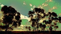 Gum Trees Bulla (maginoz1) Tags: autumn abstract art canon may australia melbourne gumtree 2016 surrealsky bulla g3x
