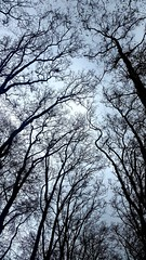 2016-05-01 02.24.44 (nickbruce483) Tags: blue trees sky brown france sticks europe