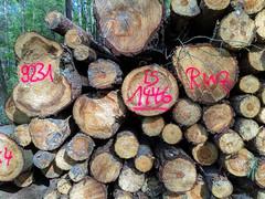 Buntes Holz (drloewe) Tags: wood dog madera labrador perro hund holz wald
