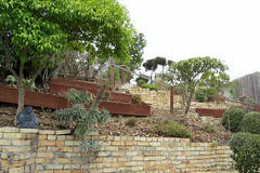 Melody's terraced back yard looking up the hill from back of house 150922-095556 C4e (Wambeke & Wambeke Photography, Art, & Textiles) Tags: sanfrancisco backyard bricks brickwall buddah brickstairs landscapedyard terracedbackyard charliewambekephotography wambekeandwambekephoto canonsx50photograph wambekewambekephotographyarttextiles sanfranciscobackyard buddahprotectinghouse