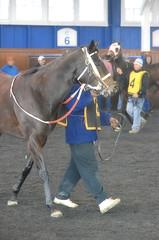 2016-01-08 (10) r1#6 Sundaes Baby (JLeeFleenor) Tags: photos photography md marylandracing marylandhorseracing laurelpark sport sports horses thoroughbreds equine equestrian cheval cavalo cavallo cavall caballo pferd paard perd hevonen hest hestur cal kon konj beygir capall ceffyl cuddy yarraman faras alogo soos kuda uma pfeerd koin حصان кон 马 häst άλογο סוס घोड़ा 馬 koń лошадь bay paddock maryland