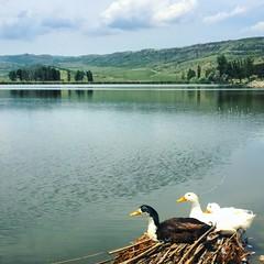 Beauty of nature #tbilisi #tiflis #georgia #lake #skyline #duck #sky #horizon #architecture #view #nature #trip #travel #amazing #tbilisiphoto #tbilisilovesyou #checkingeorgia #traveltogeorgia (chitanava) Tags: trip travel sky lake nature skyline architecture georgia duck amazing view horizon tbilisi tiflis traveltogeorgia tbilisilovesyou tbilisiphoto checkingeorgia