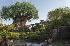 The Tree of Life (krmrudolph) Tags: florida disney disneyworld waltdisneyworld themepark animalkingdom treeoflife