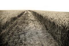 wiesenweg (joachim.d.) Tags: felder fields weg wiesenweg tnung