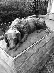 'Memories Of Our Dear Departed'   Your time on earth is over Try to reconcile This spectre we call death For no one can avoid it's stare But hope and human nature Mean we lose but still can care (Miranda Ruiter) Tags: dog cemetaries graveyard amsterdam