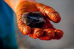 Un caillou pour la collection (FredBoug) Tags: roses les du caillou gants nordet veules ostreiculteurs huitrire