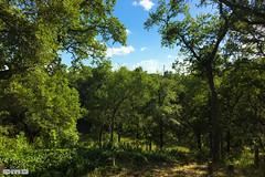 DILOJUNE_2016_-4 (cmiked) Tags: june texas waco dilo summersolstice 2016 dilo0616 dilojun16