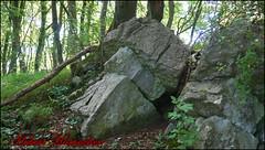 Wald Bilder (hubert_hamacher) Tags: grn wald bume baum hhle steinbruch