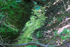 A Stream fit for St. Patricks Day) (tripod_treker) Tags: trees plants green water leaves forest woods streams ferns
