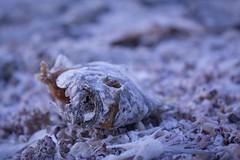 Untitled (ctklink) Tags: california sea landscape photography tyler salton klink
