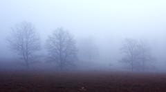 Dreams (just.like.that.) Tags: november autumn trees mist fall nature animal fog wildlife royal deer fields dreamy buck reddeer dreamscape kronhjort