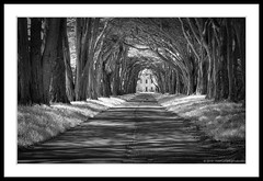 Tunnel of Trees to RCA Building (C. Roy Yokingco) Tags: california travel trees usa monochrome photography nikon tunnel bayarea handheld marincounty pointreyes montereycypress westcoast 2010 1929 pointreyesnationalseashore goldengatenationalrecreationarea d90 silverefexpro afs2470mm nxtrfoto nextierphotography rcamarconiwirelessstation