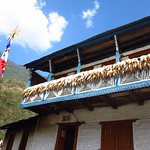 "Corn Drying <a style=""margin-left:10px; font-size:0.8em;"" href=""http://www.flickr.com/photos/14315427@N00/6840125980/"" target=""_blank"">@flickr</a>"