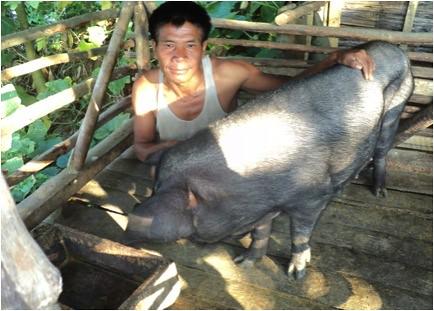Nagaland pig farmer Manpai Konyak by International Livestock Research Institute, on Flickr