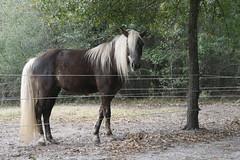 IMG_6195 (Barbara Alexander) Tags: horses boundaries selfimprovement selfawareness mentorship barbaraalexander equineexperientiallearning eponaridge