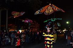 Krewe of Muses 2012 Parade