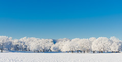 Morning After (Michael Kline) Tags: winter snow va salem february 2012