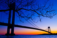 Verrazano Narrows Bridge and the Tree... (Braulio F. Cosme) Tags: flickr 5 award verrazanonarrows flickraward flickrunitedaward