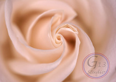 Pink Rose Love Swirl 6X4 (Southern Treasure House) Tags: pink flower love floral rose print photography photo soft swirl walldecor artphoto