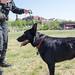 Officer Puppy
