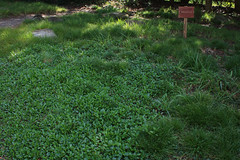 Meadow - Fross Garden (Melissa-Gale) Tags: california grass garden landscape demo photography oak quercus nursery meadow melissa gale mg demonstration gail wholesale arroyogrande gorman berard sedge carex nativesons mg00841 frossgarden